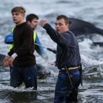 Myndir: Einir 50 hvalir dripnir í Sandavági