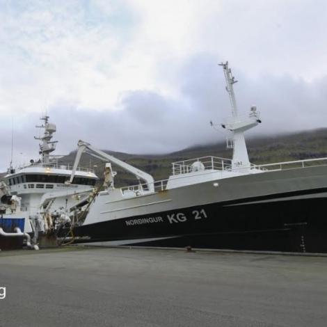 Norðingur landar makrel í Kollafirði