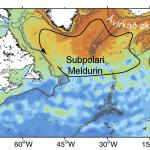 Subpolari meldurin er styrknaður
