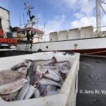 Toskakvotan á Flemish Kap hækkar upp í sløk 4000 tons