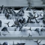 Viðurskiftini í lagi á 85 prosent av fiskavirkjunum