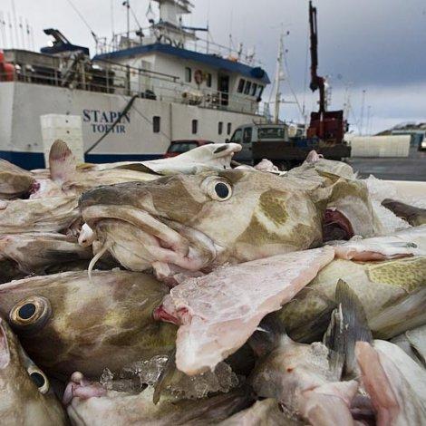 ICES mælir til at hálvera toskafiskiskapin