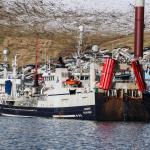 Fagraberg og Isafold landa í Fuglafirði