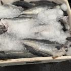 Útflutningurin av fiskavørum minkaði 1,4 milliardir