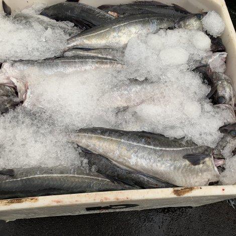 Heilsufrøðiliga starvsstovan: Føroyskar fiskavørur lúka ES-krøv