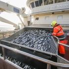 12 føroysk skip fiska makrel í norskum sjógvi