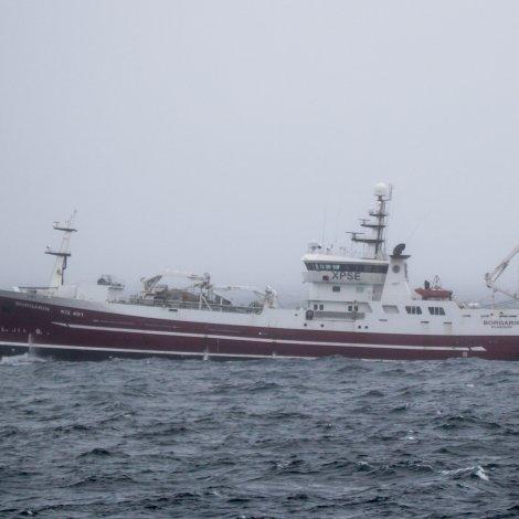 Borgarin og Hoyvík skulu landa makrel í Fuglafirði
