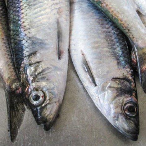 Broyting í skipanini í fiskiskapinum hjá ídnaðarskipum eftir makreli í 2019