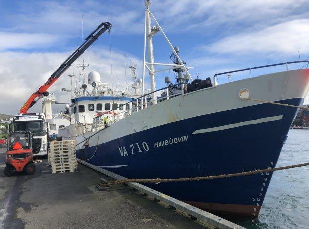 Havbúgvin landar við Vestaru Bryggju í Havn