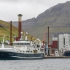 Høgaberg landar sild í Fuglafirði