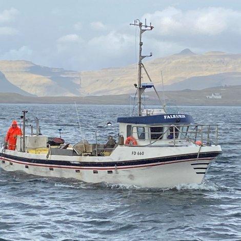 Falkurin góðan fiskiskap
