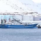 Norsk uppsjóvarskip landa lodnu í Fuglafirði