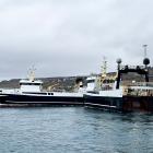 Umleið 300 tons av gulllaksi landað í Klaksvík