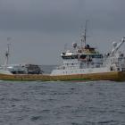 Norskt uppsjóvarskip skal landa makrel í Kollafirði